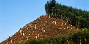 deforestaci