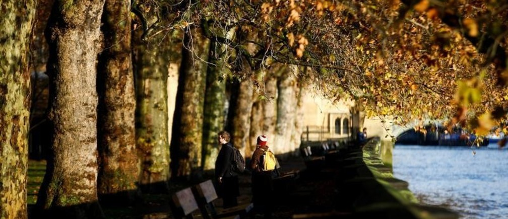 Más árboles reducen las muertes prematuras en las ciudades