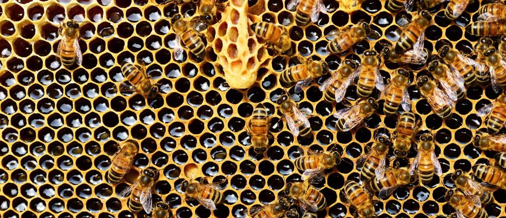 Menos contaminación, más flores, más miel: cómo el confinamiento ha frenado el declive de las abejas